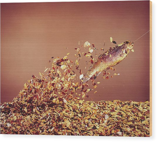 Trout Flying Out Of Bed Of Almonds In Pr Wood Print by John Dominis
