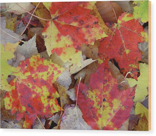 True Autumn Colors Wood Print