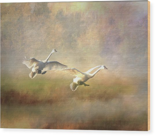 Trumpeter Swan Landing - Painterly Wood Print