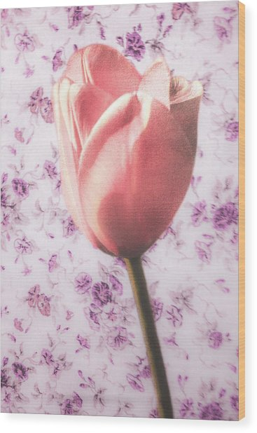 Wood Print featuring the photograph Tulip Contrasted by Michael Arend
