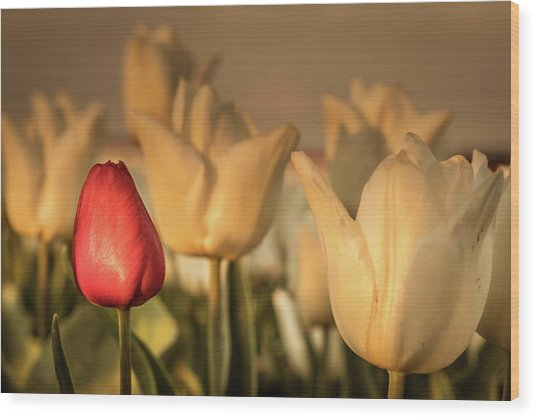 Wood Print featuring the photograph Tulip Field by Anjo ten Kate