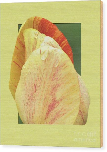 Tulip Petals Escaping Wood Print