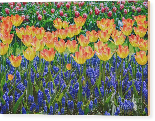 Tulips And Muscari Flowers Wood Print