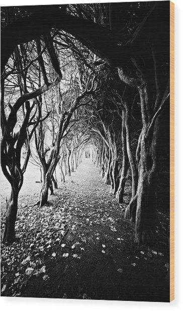 Tunnel Of Trees Wood Print by Michelle Mcmahon