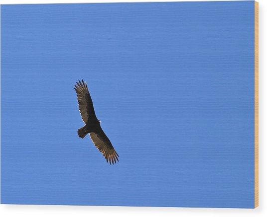 Turkey Vulture Soaring Wood Print