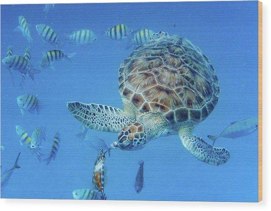 Turning Turtle Wood Print