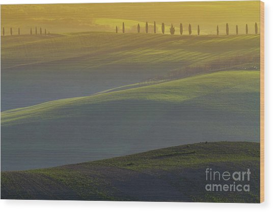 Tuscan Hilly Scenery With Cypress Trees Wood Print