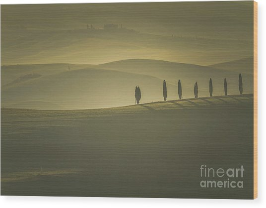 Tuscan Scenery With Cypress Trees Wood Print