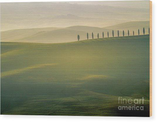Tuscany Landscape With Cypress Trees Wood Print