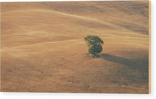 Wood Print featuring the photograph Tuscany by Mirko Chessari