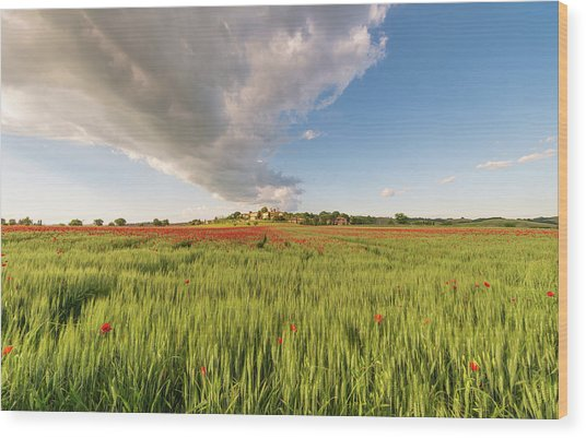 Wood Print featuring the photograph Tuscany Wheat Field Dotted With Red Poppies by Mirko Chessari