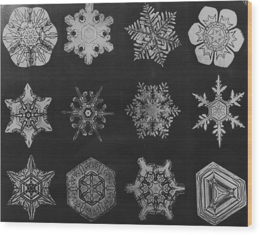 Twelve Snow Crystals Wood Print by Herbert
