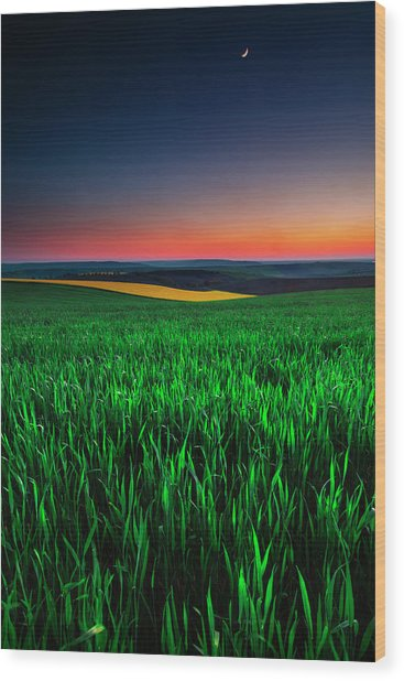 Twilight Fields Wood Print