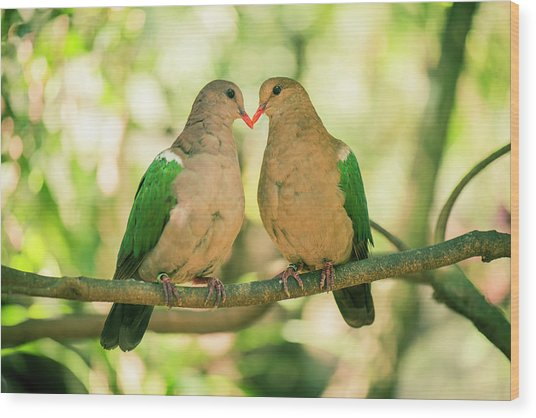 Two Colourful Doves Resting Outside On A Branch. Wood Print