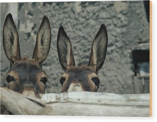 Two Donkeys Peering Over Fence, Close-up Wood Print