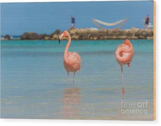 Two Flamingos On The Beach Wood Print