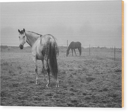 Two Horses Bw Wood Print by David Gordon