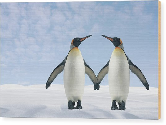 Two Penguins Holding Hands Wood Print by Fuse