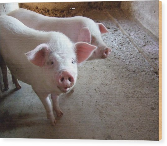Two Pigs Wood Print by Shinichi.imanaka
