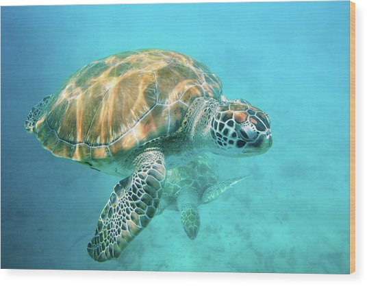 Two Sea Turtles Wood Print by Matteo Colombo