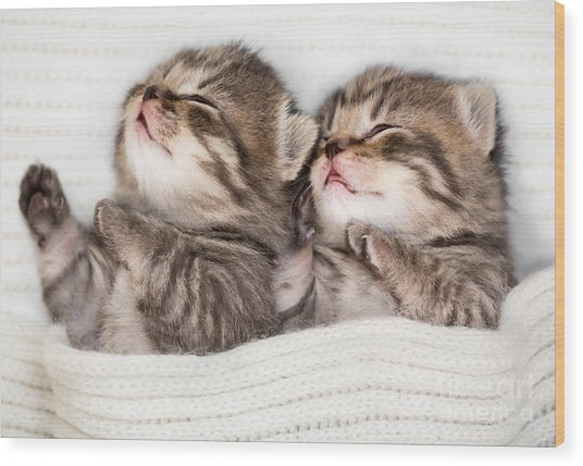 Two Sleeping Baby Kitten Wood Print