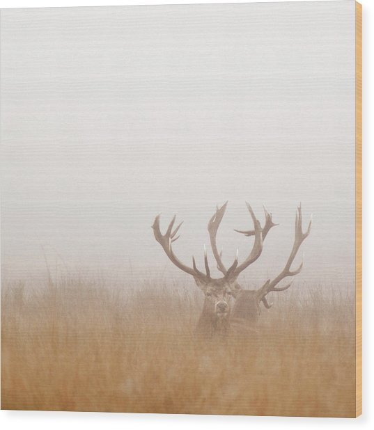 Two Stag Deer Resting In Field On Foggy Wood Print by Beholdingeye