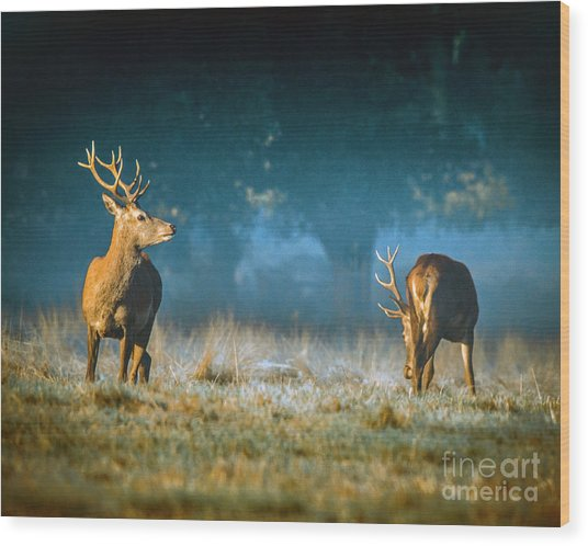 Two Stags Wood Print