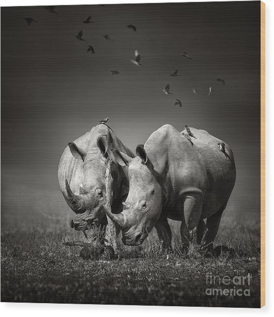 Two White Rhinoceros In The Field With Wood Print
