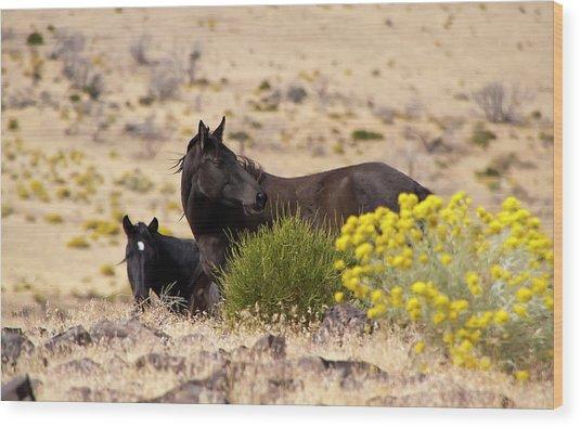 Two Wild Black Horses Among Yellow Flowers Wood Print