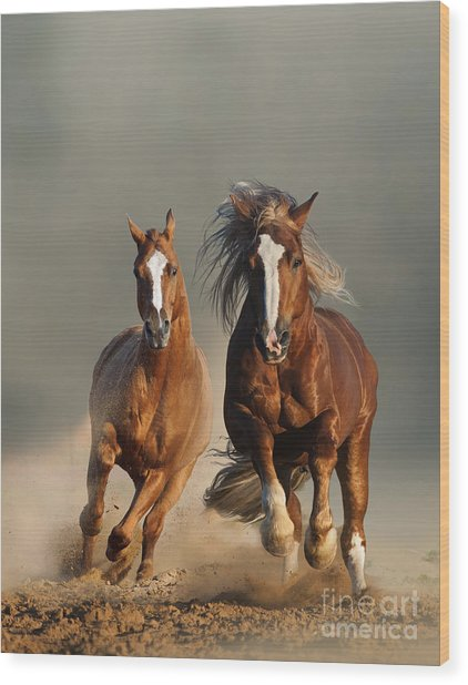 Two Wild Chestnut Horses Running Wood Print