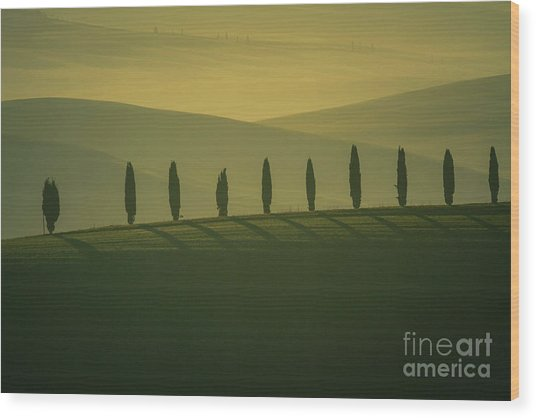 Tuscan Cypress Trees In Hilly Landscape Wood Print