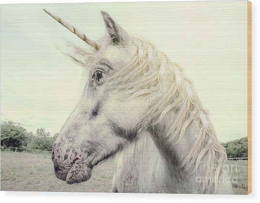 Unicorn Photography Realistic Wood Print