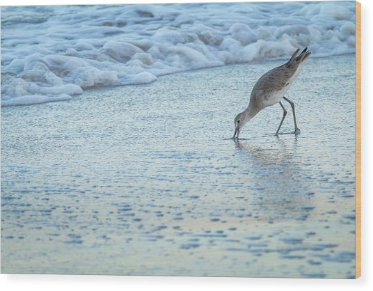 Usa, Florida A Willet Digs In The Sand Wood Print by Margaret Gaines