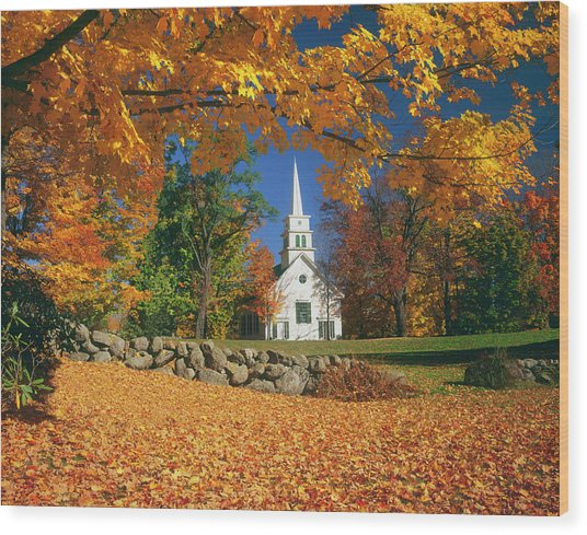 Usa, New Hampshire, Sugar Maples Acer Wood Print