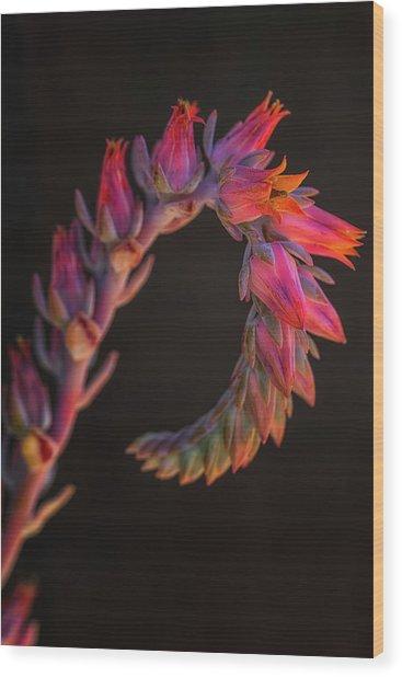 Vibrant Arc Wood Print