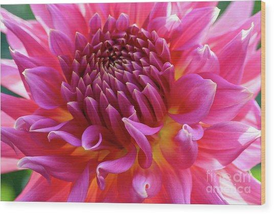 Vibrant Dahlia Wood Print