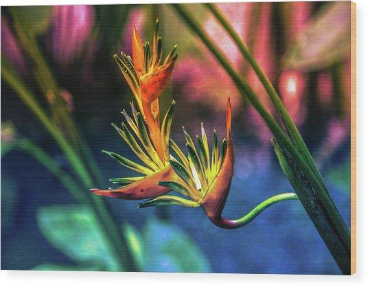 Vibrant Jungle Bird Wood Print