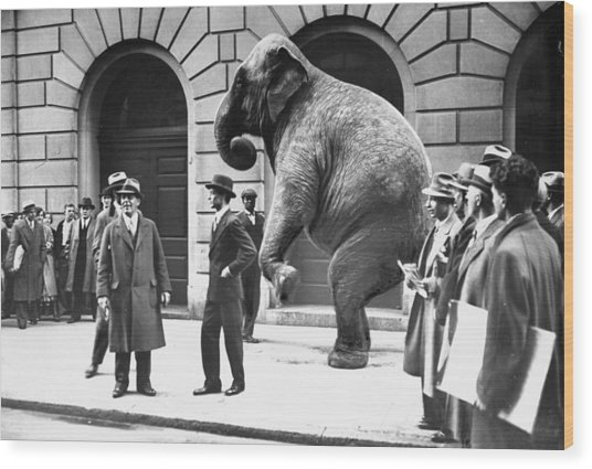Victory, The G.o.p. Elephant, Stands In Wood Print by New York Daily News Archive
