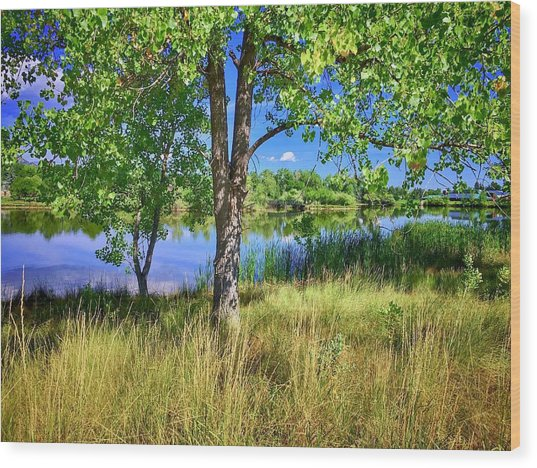 Wood Print featuring the photograph Viele Lake 4 by Dan Miller
