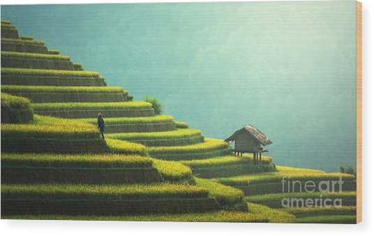 Vietnam Rice Fields On Terraced Of Mu Wood Print