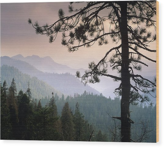 View Over Foothills To The West From Wood Print by Tim Fitzharris/ Minden Pictures