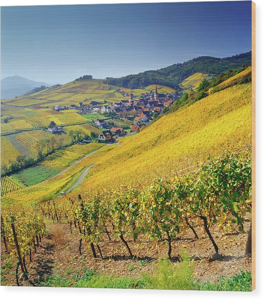 Vineyard In Alsace, Haut-rhin, France Wood Print