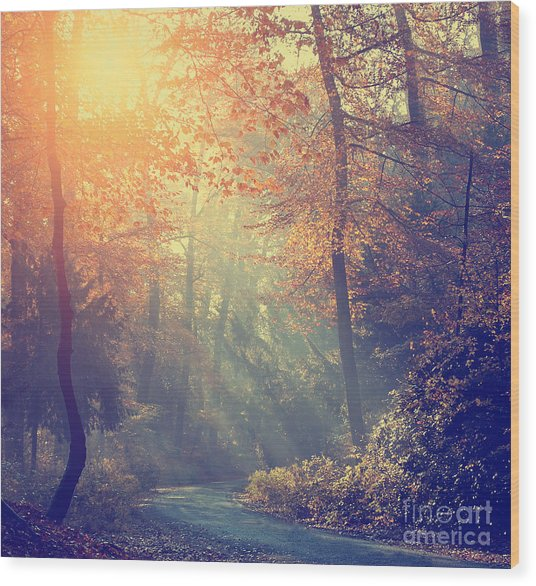 Vintage Photo Of Autumn Forest Wood Print by Dark Moon Pictures