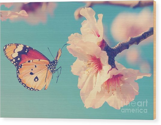 Vintage Spring Image With Butterfly And Wood Print