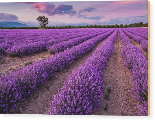 Violet Dreams Wood Print