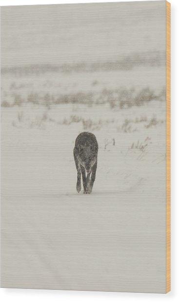 W33 Wood Print
