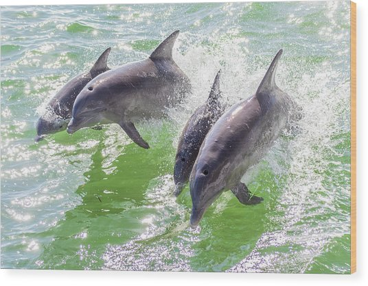 Wake Surfing Dolphin Family Wood Print