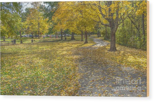 Walk In The Park @ Sharon Woods Wood Print