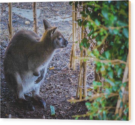 Wallaby Wood Print