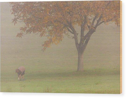 Walnut Farmer, Beynac, France Wood Print